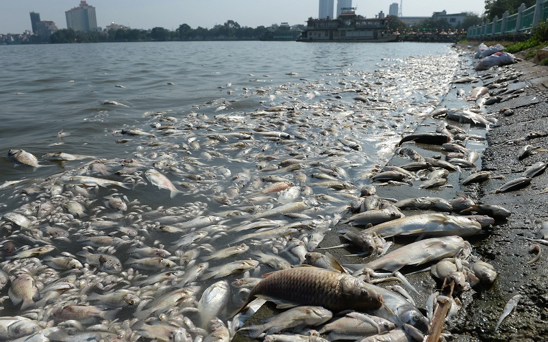 Fish dying in the sea